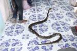 Video: Nhân viên cứu hộ lôi con trăn hung dữ ra khỏi phòng bé trai
