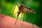 Các sản phẩm, dịch vụ 'ăn theo' dịch sốt xuất huyết cháy hàng