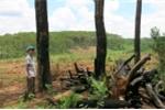 Chuyện thật như đùa: Doanh nghiệp ngang nhiên 'triệt hạ' rừng bán cho dân