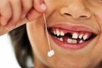 Răng mọc và rụng như thế nào?