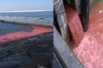 Clip cống xả nước thải màu đỏ quay ở Formosa là thông tin thất thiệt