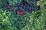 Cận cảnh bộ lạc cạo nửa đầu, sống 20.000 năm không thay đổi trong rừng Amazon