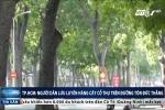 Vì sao người dân TP.HCM lưu luyến hàng cây cổ thụ trên đường Tôn Đức Thắng?
