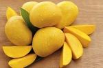 Lợi ích sức khoẻ đáng ngạc nhiên của trái xoài
