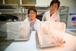 Sẽ thả muỗi trừ sốt xuất huyết ra ngoại thành Nha Trang