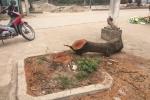 Dẹp 'cướp' vỉa hè, chặt hạ hàng loạt cây xanh: Có dấu hiệu vi phạm pháp luật