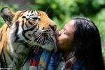'Người rừng' chung sống với hổ dữ nhiều năm