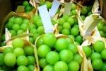 Trái cây lạ giá tiền triệu/kg được ồ ạt nhập về Việt Nam