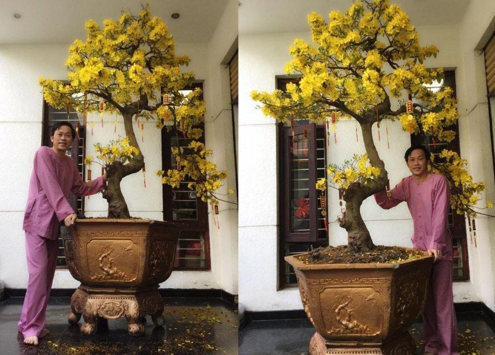 Mang cay bonsai nua ty dong di thi, NSUT Hoai Linh 'am' luon giai nhat hinh anh 6