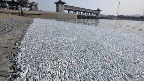 Formosa Ha Tinh boi thuong 500 trieu USD, Formosa Dai Loan co lao dao? hinh anh 1