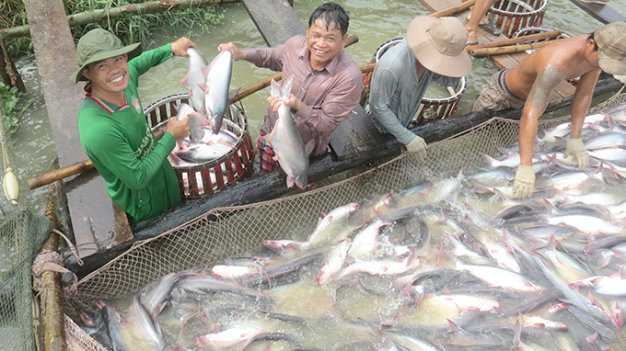 Thuong lai Trung Quoc lai lam loan gia ca tra hinh anh 1