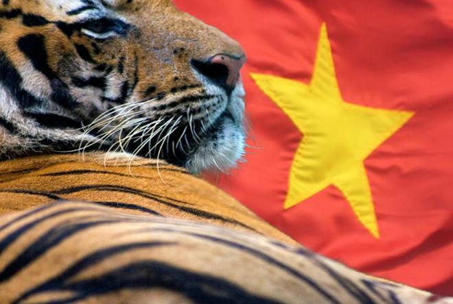 Bao nuoc ngoai: Viet Nam la 'con ho Chau A' moi dang troi day hinh anh 1