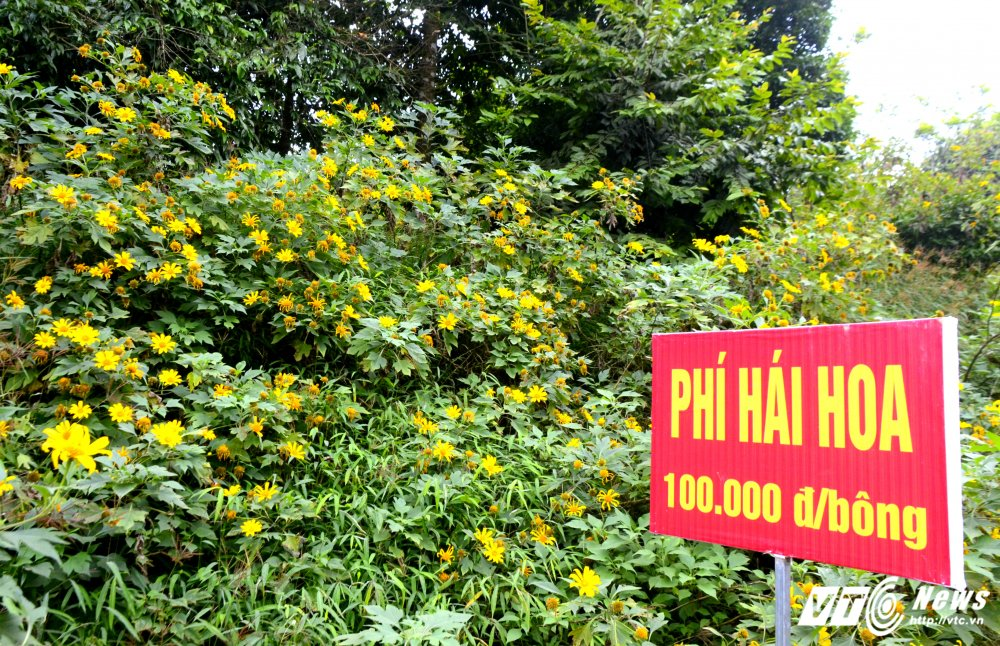 Can canh loai hoa rung co phi hai 100.000 dong mot bong hinh anh 2