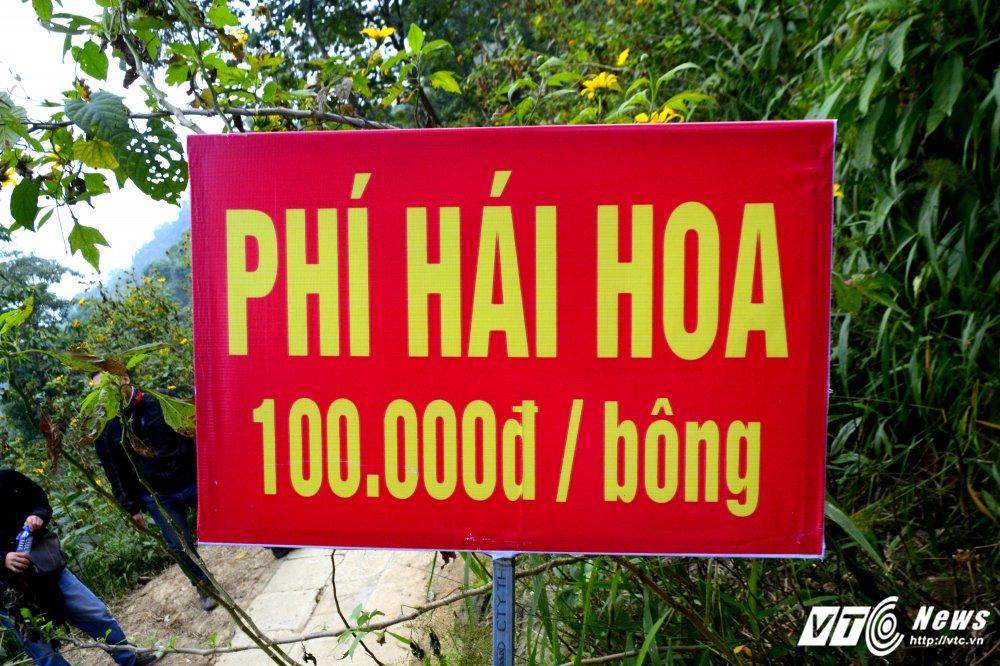 Can canh loai hoa rung co phi hai 100.000 dong mot bong hinh anh 3