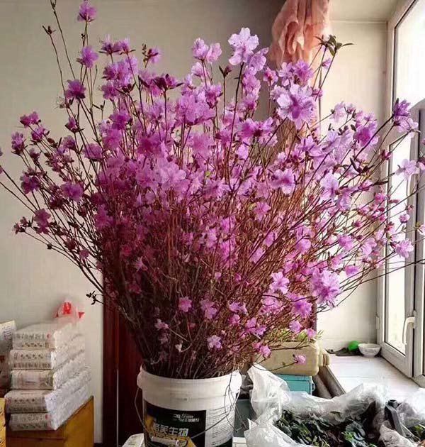 Se ra soat nguy co tu hoa do quyen ngu dong, tao bonsai hinh anh 3