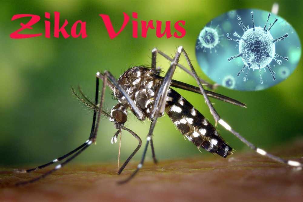 So Y te TP.HCM chi dao phong chong benh do virus Zika hinh anh 2