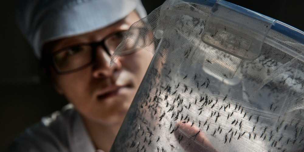 Zika tai TP.HCM: 3 ngay phat hien them 8 ca nhiem hinh anh 1