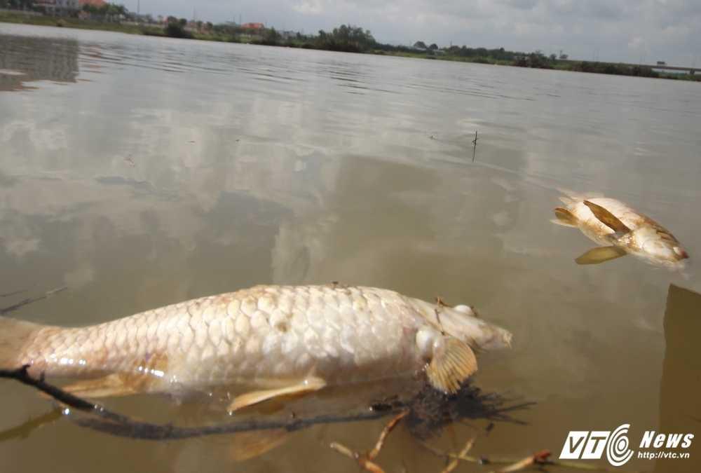 Cá chét bát thuòng, dan Quang Nam vot nau cho lon an hinh anh 2