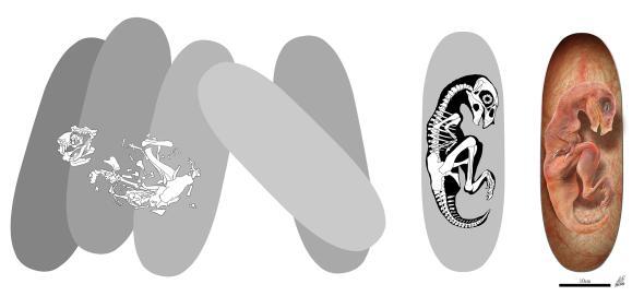 Bi an bao thai tim thay ben trong o trung khung long khong lo hinh anh 2