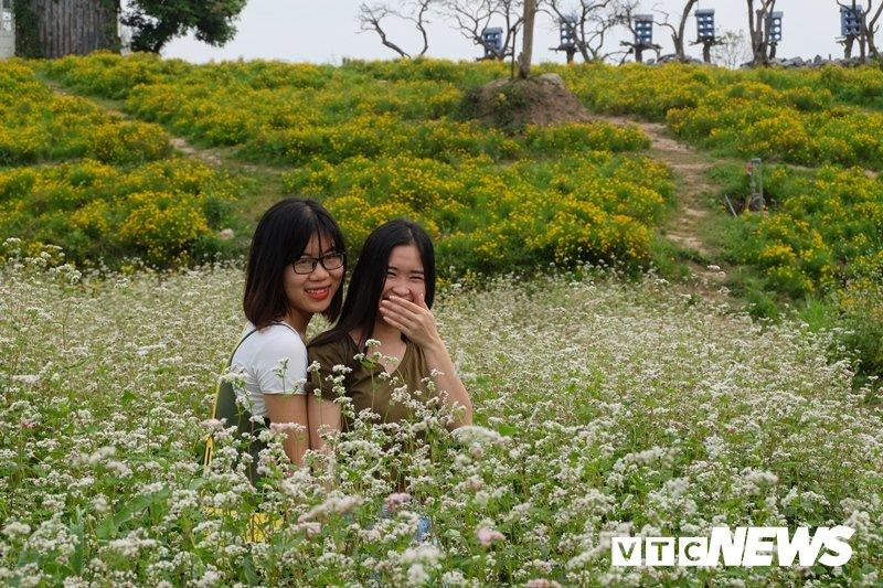 Anh: Hoa tam giác mạch trái mùa bung no giua long Ha Noi hinh anh 7