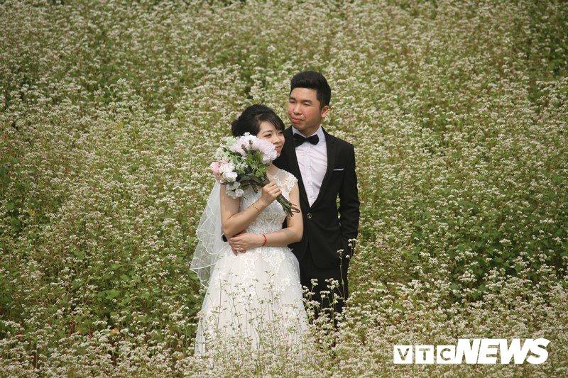 Anh: Hoa tam giác mạch trái mùa bung no giua long Ha Noi hinh anh 5