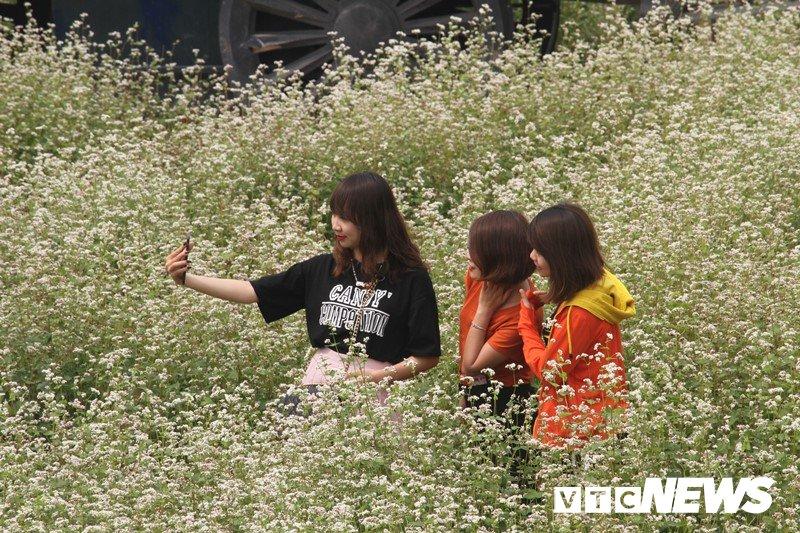 Anh: Hoa tam giác mạch trái mùa bung no giua long Ha Noi hinh anh 3