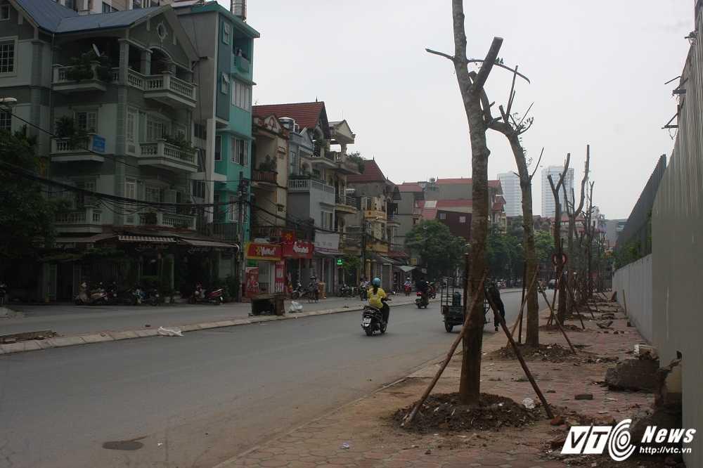 Anh: Hang loat cay chet kho tren pho Ha Noi duoc thay the hinh anh 2