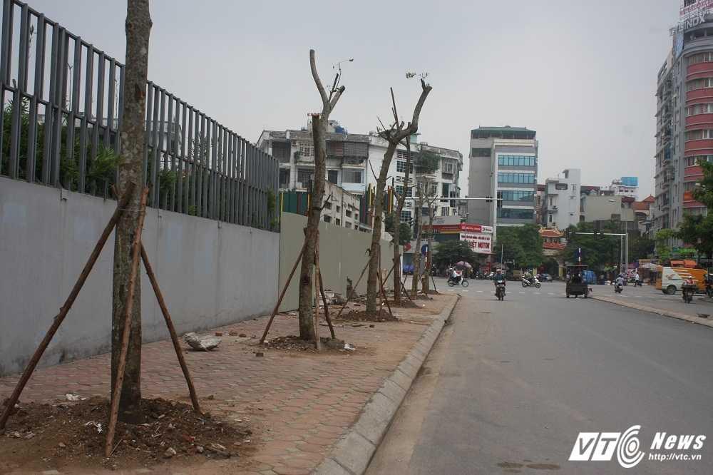 Anh: Hang loat cay chet kho tren pho Ha Noi duoc thay the hinh anh 1