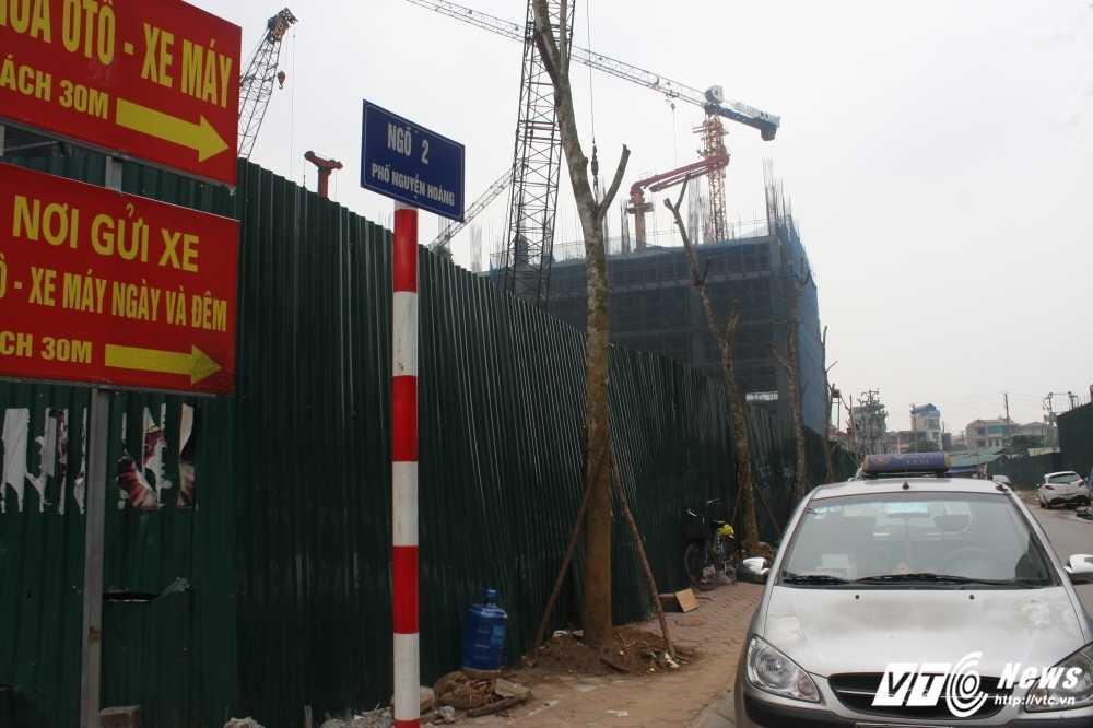 Anh: Hang loat cay chet kho tren pho Ha Noi duoc thay the hinh anh 3