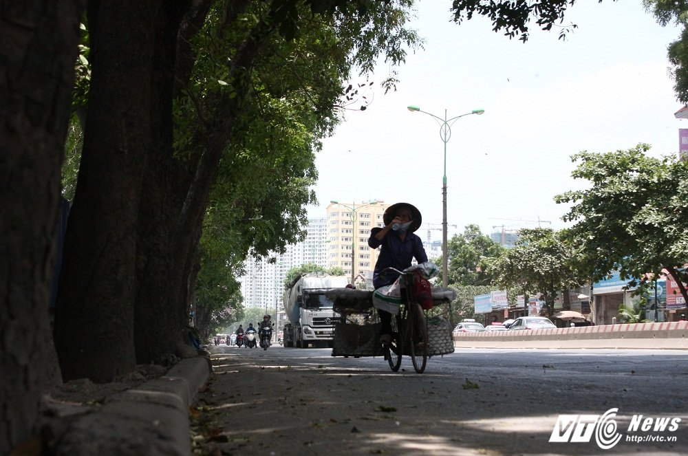 Anh: Hon 1.300 cay xanh truoc ngay bi don ha tren pho Ha Noi hinh anh 4