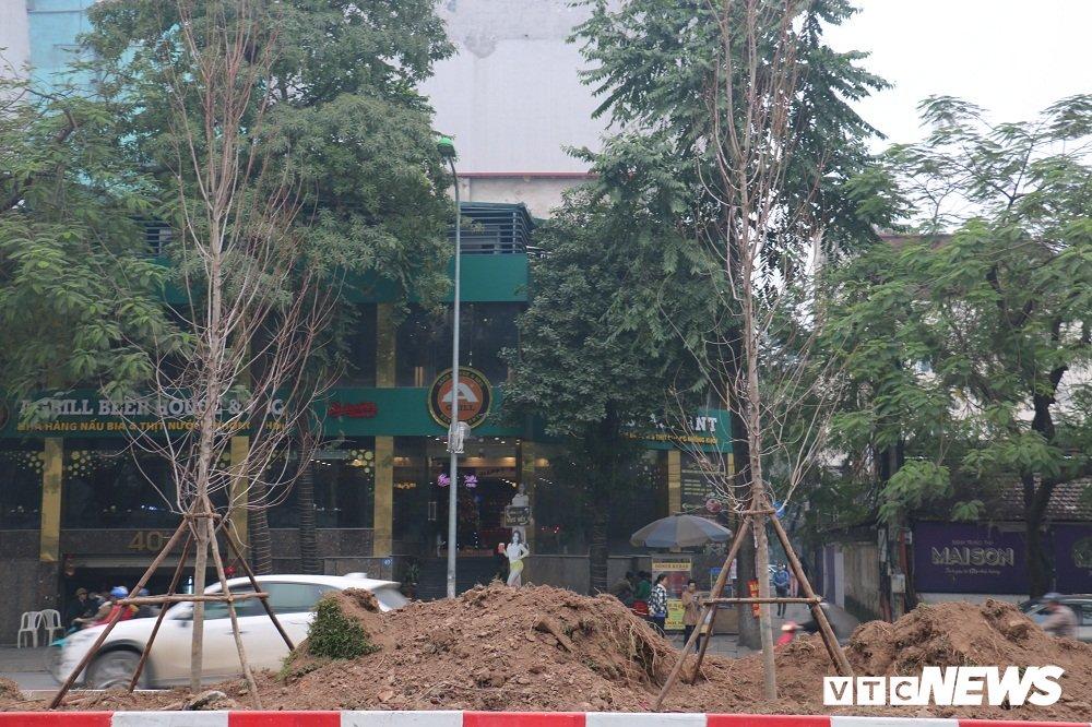 Anh: Ngam hang phong la do dam chat chau Au lan dau duoc trong tren pho Ha Noi hinh anh 5