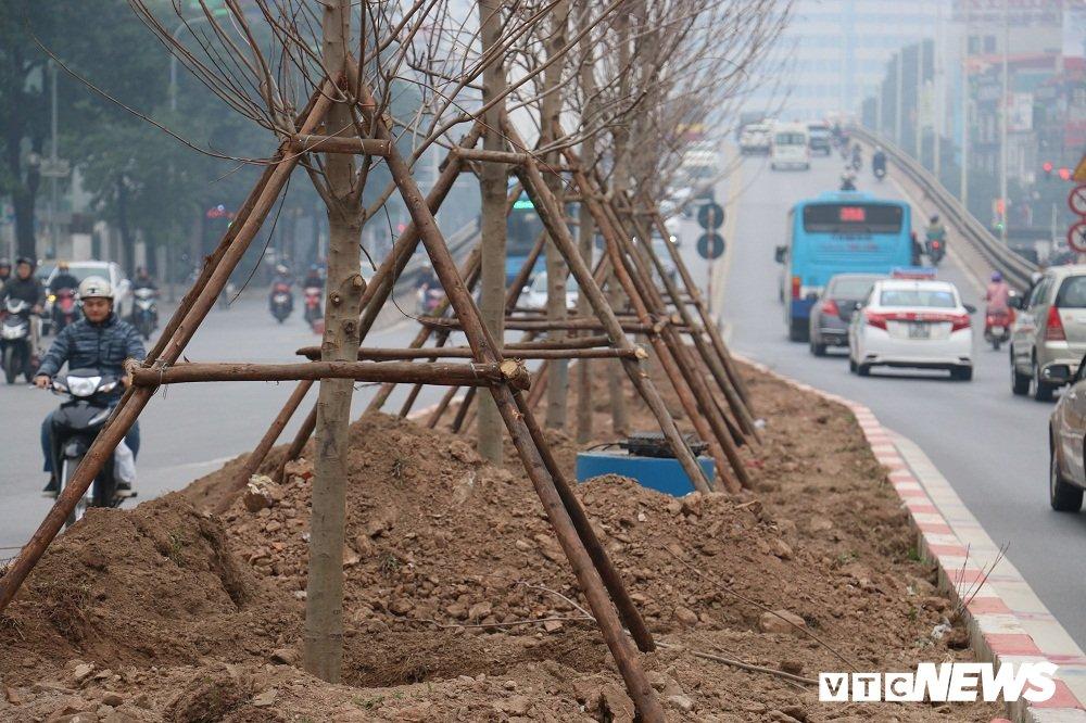 Anh: Ngam hang phong la do dam chat chau Au lan dau duoc trong tren pho Ha Noi hinh anh 4