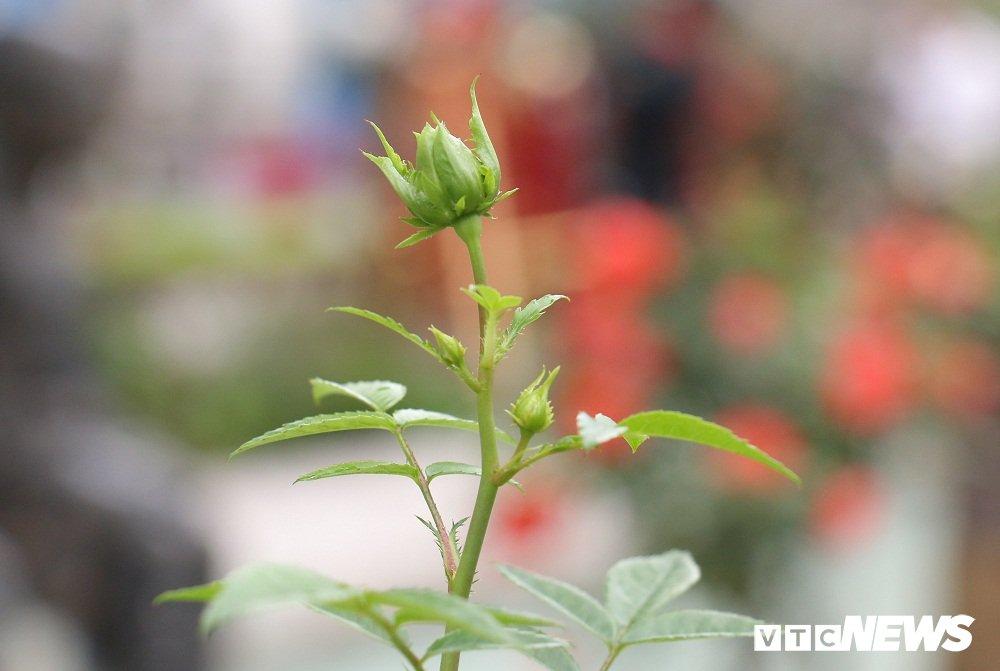 Hoa hong xanh tai le hoi hoa hong Bulgaria co gi dac biet? hinh anh 7
