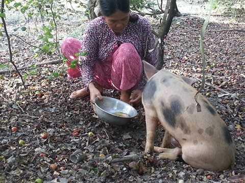 Anh Đẩm mang con heo ra vườn nuôi chứ nhất quyết không bán.