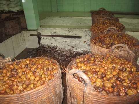 Một cơ sở sản xuất mứt, ô mai quận Bình Tân, TP.HCM. Nguyên liệu làm mứt được chứa trong những cần xé đầy cáu bẩn.