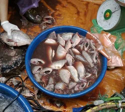 Cá ươn, cá thối để trong chậu nước đen ngòm đang được chủ cửa hàng chuẩn bị lọc để đem đi tiêu thụ. Ảnh: Lê Phương