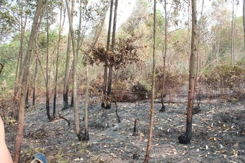 Một khu rừng cách hiện trường chừng 500m bốc cháy.