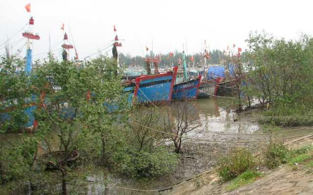 Tàu, thuyền tránh bão ở cảng Lạch Hới - Sầm Sơn - Thanh Hóa. Ảnh: GD& TĐ.