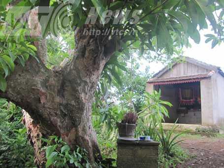 Nơi thờ thần hổ, dưới gốc cây sở cổ thụ