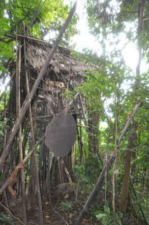 Ngôi nhà trên cây của người rừng.