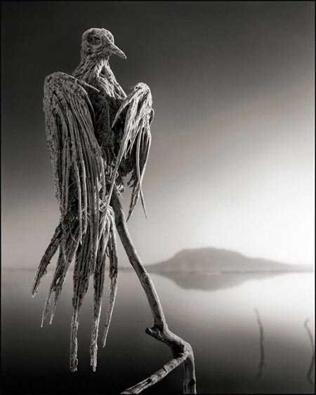 Nếu các loài chim rơi xuống nước, hậu quả sẽ là cái chết thế này