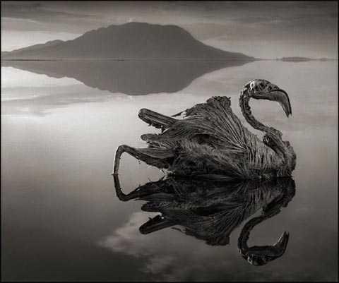 Cái xác ngâm trong nước hồ không phân hủy mà dần dần bị vôi hóa như là một quá trình
