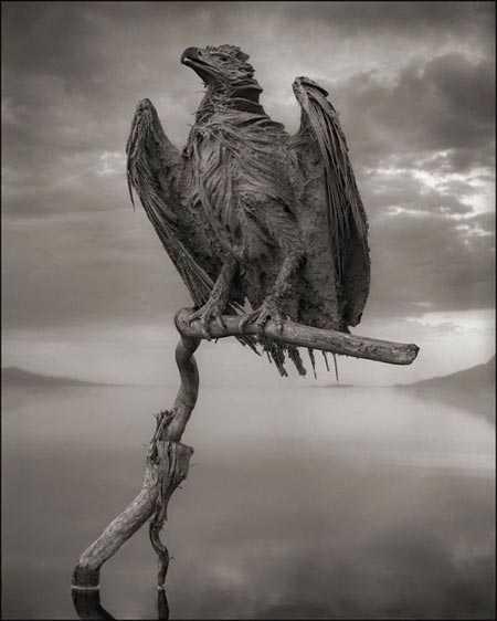 Xác của con chim đại bàng này được bảo quản gần như nguyên vẹn, trở thành một bức tượng đầy ám ảnh