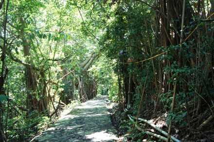 Quần thể cây di sản đa búp đỏ lớn nhất Việt Nam