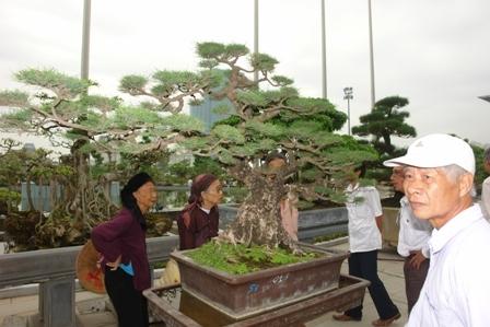 Ngắm cây cảnh trưng bày tại Triển lãm cây cảnh sự kiện 1.000 năm Thăng Long - Hà Nội.