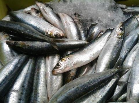 Người bị bệnh gút tuyệt đối không nên ăn cá trích.