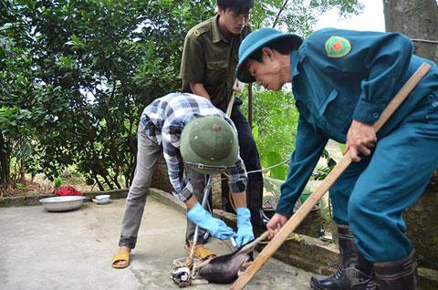 Tiêm phòng dại cho chó tại Sóc Sơn. Ảnh: Đất Việt