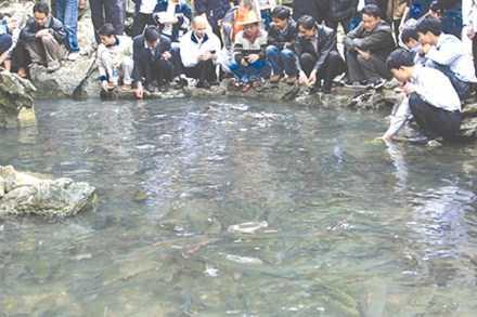 Đông đảo du khách đến xem suối cá.