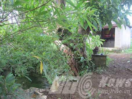 Một ngôi miếu thờ hổ ở huyện Thạch Thành (Thanh Hóa)