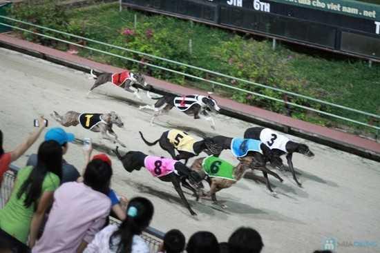 Chó đua đem đến những phút giây hứng khởi cho người xem nhưng rồi mọi người cũng nhanh chóng lãng quên nó.